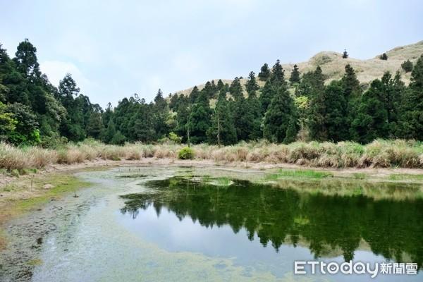 全台最安靜湖泊!陽明山「五感森林療癒」抱樹木、走入青楓秘境   ETto