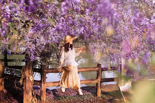紫色風暴免費看!龜山大湖公園「紫藤、流蘇滿開」映襯池水美翻 | ETto