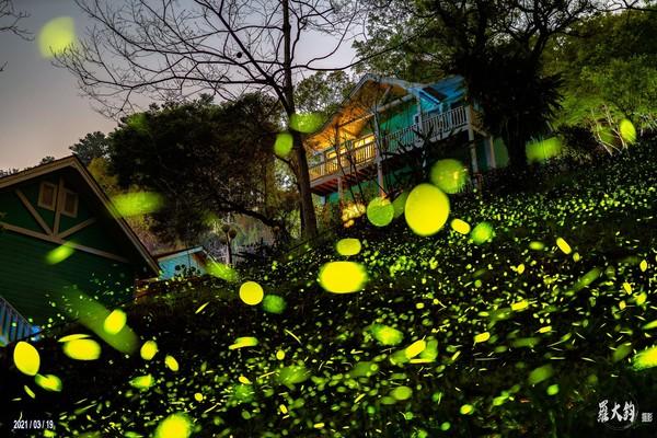 螢火蟲、紫藤花大爆發!隱身嘉義山中的秘境 限時美景錯過等明年   ETt