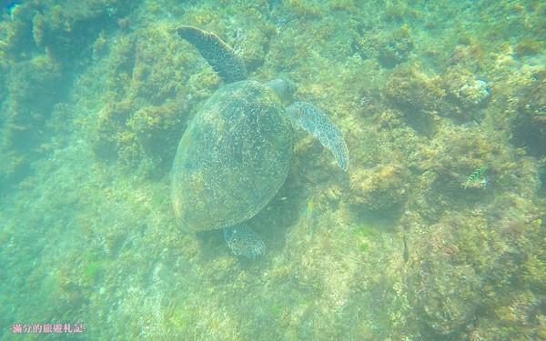 暢遊海底世界賞海龜!小琉球必訪景點 礁岩風光+滿天星空超療癒   ETt