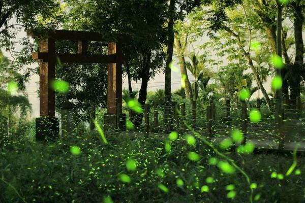 地表最夢幻「螢河」在那瑪夏!漫步4條賞螢步道 還能逛市集 | ETtod