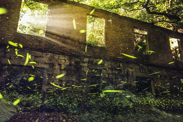廢墟前螢河飛舞、東北角螢況最好地方!特搜「新北6處火金姑秘境」 | ET