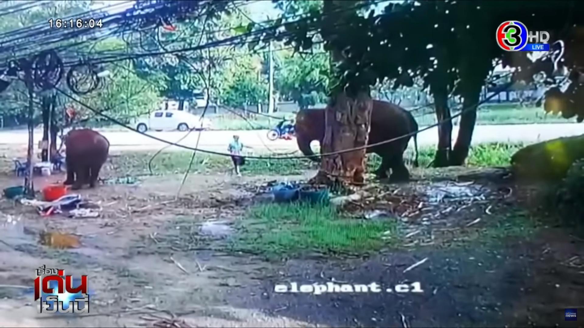 ▲▼泰國男子慘遭母象攻擊。(圖/翻攝自Youtube@Ch3ThailandNews)