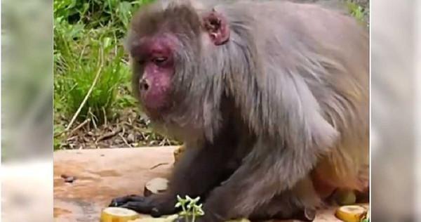 正在吃自己生日大餐的勤子。(圖/翻攝自推特)