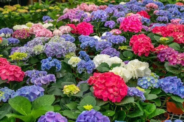 賞花族不能錯過!首屆『桃園繡球花季』8000坪繡球花園結合繡球藍色、紫色等各色繡球花形成最美打卡亮點,還能沿路行經各區免費欣賞花海、漫步枕頭山步道健行賞花…
