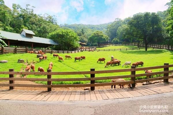 秒飛紐西蘭!苗栗親子露營牧場 手擠牛奶、跟「鴨鴨軍團」逛大街