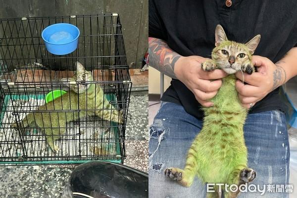 虎斑貓遭「染成綠毛」縮鐵籠吹風! 獲援後「來不及回家」不治亡