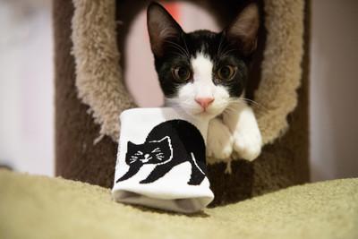 從小養才親人?破解認養迷思 獸醫提醒:了解自己的「生活步調」選擇合適貓伴侶