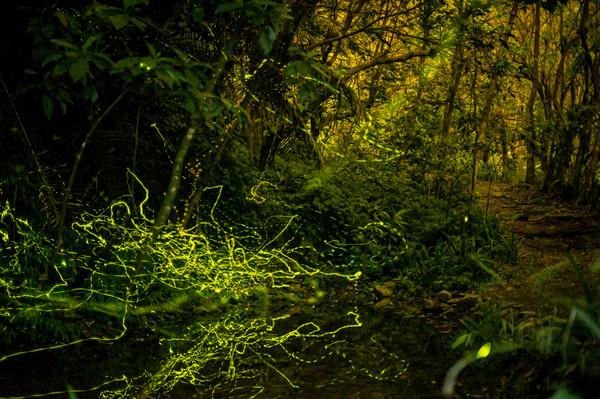 宜蘭最美賞螢農場懶人包!感受被綠色星空包圍 在清水模民宿中入眠