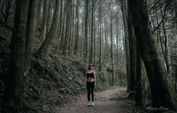 童話迷幻森林!台中橫嶺山步道必訪仙境 裊裊雲煙穿梭樹林超浪漫 | ETt
