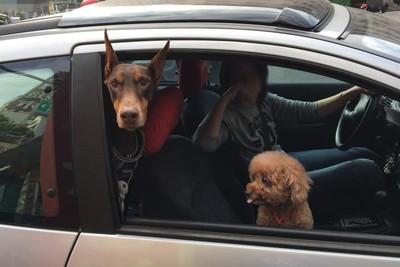 車窗一開杜賓「保鑣魂」上身 嚴肅臉嚇壞加油站員工:會咬人嗎?