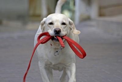 帶狗狗搭電梯要小心!狗繩真的要顧好