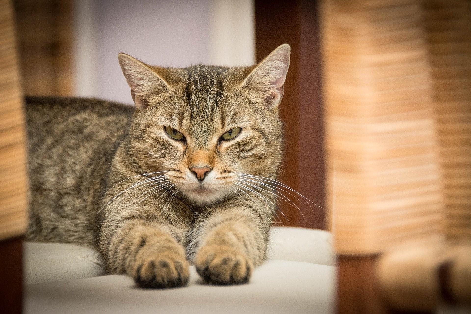 ▲▼芝加哥公益團體在街區安放千隻以上流浪貓,捕捉為患已久的老鼠。(示意圖/取自Pixabay)