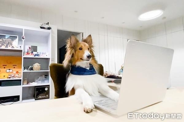 在家上班「擼狗吸貓」超幸福? NG行為讓毛孩壓力大到生病!   ETto