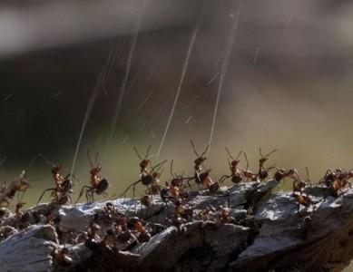螞蟻齊射神秘液體,對抗空中的敵人♂