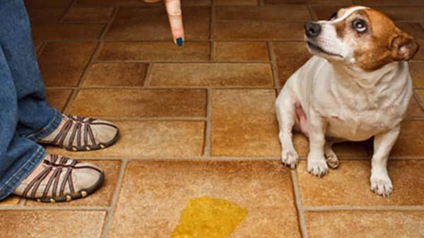 狗狗去廁所的圖片搜尋結果