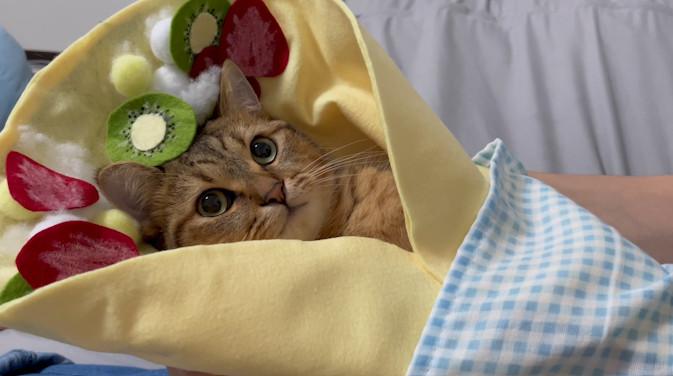 ▲▼貓咪可麗餅。(圖/翻攝自推特/@minira_diary)