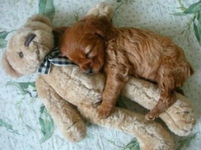幼犬抱娃娃睡搞搞,醬卡有安全感啦~