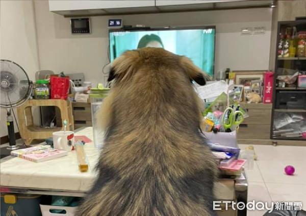 在家追劇!螢幕狂被「毛毛巨獸」遮住 媽喊「別擋正前方」都不理   ETt