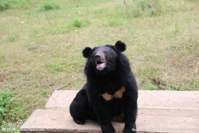 韓國「違法農場」2黑熊逃脫! 才跑400m慘遭射殺...另一隻失蹤