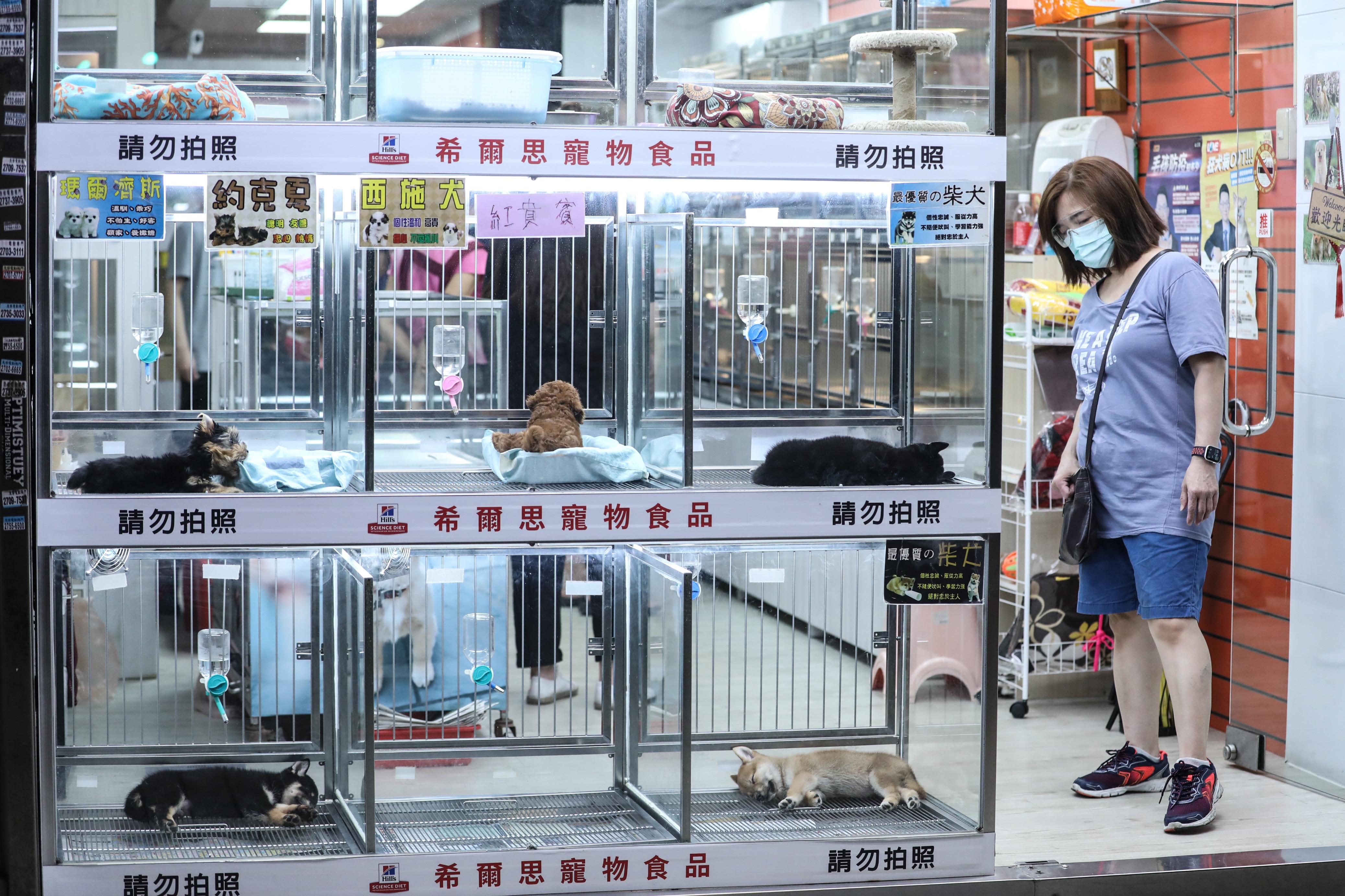 貓,走私,農委會,動物保護法,動物傳染病防治條例,陳吉仲,蘇貞昌,蔡英文,動保,檢疫,狂犬病