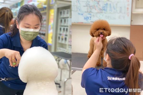 ▲▼(內訓)KCT美容檢定賽奪佳績! 東森寵物雲堅持給毛孩最專業的服務。(圖/東森寵物雲)
