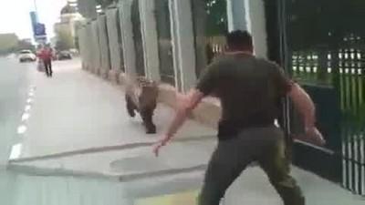 俄羅斯人街頭擒抱棕熊,這次是真的…