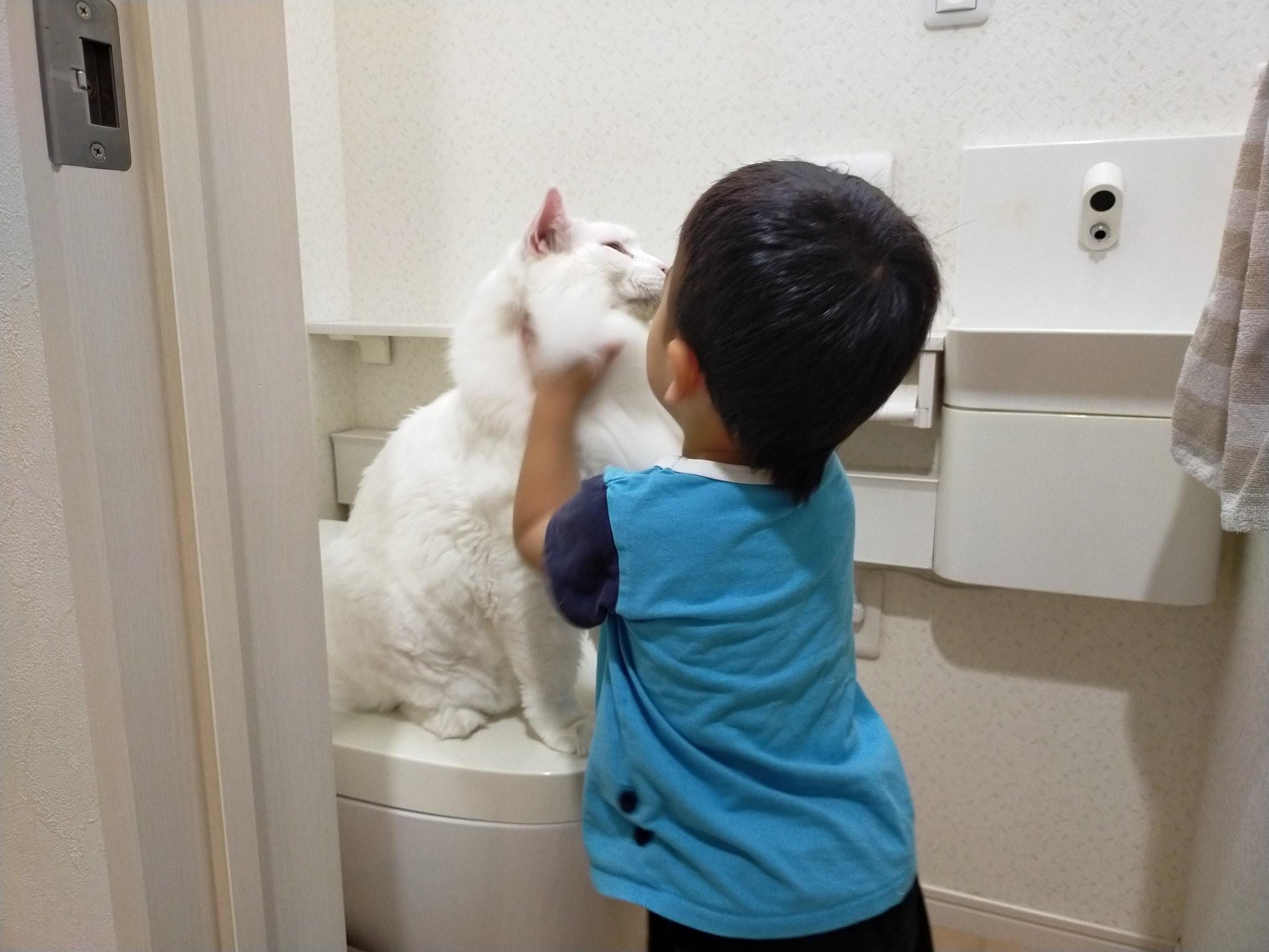 ▲▼貓咪霸占馬桶,害3歲兒子睡前沒辦法上廁所。(圖/翻攝自twitter/@FakeYashu)