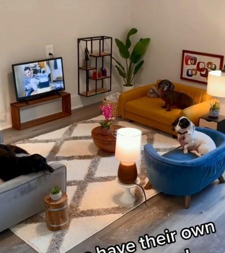 ▲▼狗狗有專屬客廳(圖/翻攝自TiKTok/bam12008)