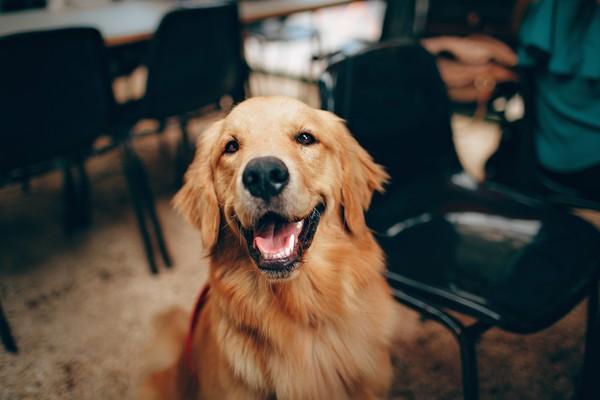 ▲狗公園,迎風狗,親情寵物公園,蘆堤寵物公園,寵物,狗狗,狗,動物。(圖/pexels)