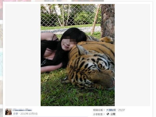 ▲▼「扒胸妹」愛扮迷途兔女郎,也愛超猛老虎。(圖/取自「猴抓妹」臉書)
