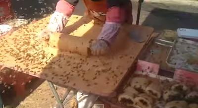 中國攤販大挑戰~活蜜蜂麻糬你敢吃?