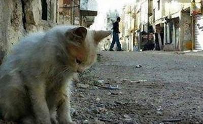 戰爭害牠無處去..乖,貓上校帶你回家
