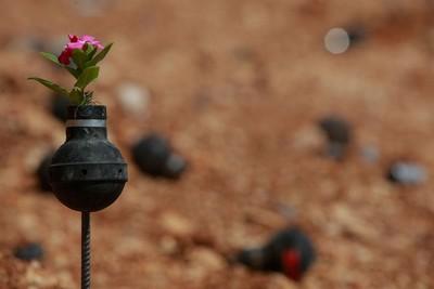 殺人手榴彈,也能變成種出希望的盆栽