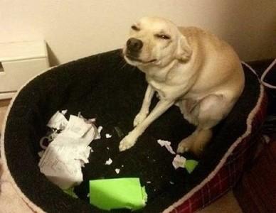 狗現行犯當場被抓!心虛坐下裝無辜