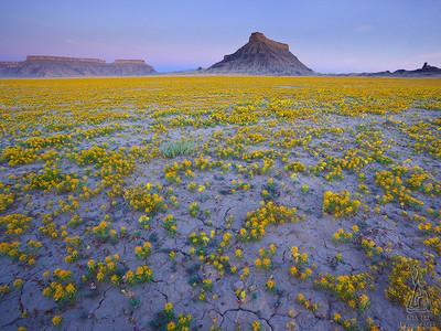 沙漠中盛放的花朵,就是絕境中的希望