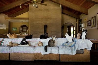 宛如天堂 世上最大的貓咪收容所