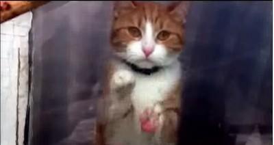 出門後,我家貓咪的舉動讓我眼角濕了