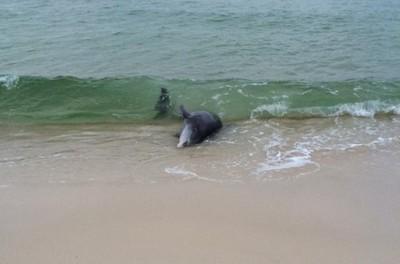 本以為幫不上忙,竟不小心救了海豚!