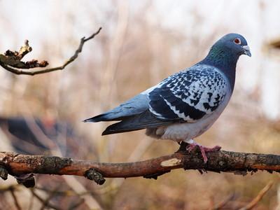 野鴿群聚排泄 動保處4招減少出沒量