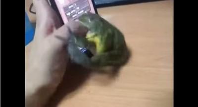 青蛙大秀捕蟲功,下一秒卻立刻翻臉..