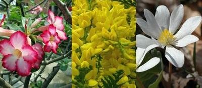 美麗卻深藏劇毒,這10種花絕對碰不得