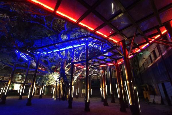 晚上去超美!台南人夜遊秘地 環抱大榕樹「天空步道」