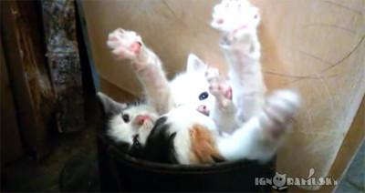 三隻小貓同擠一靴,萌力也是三倍!
