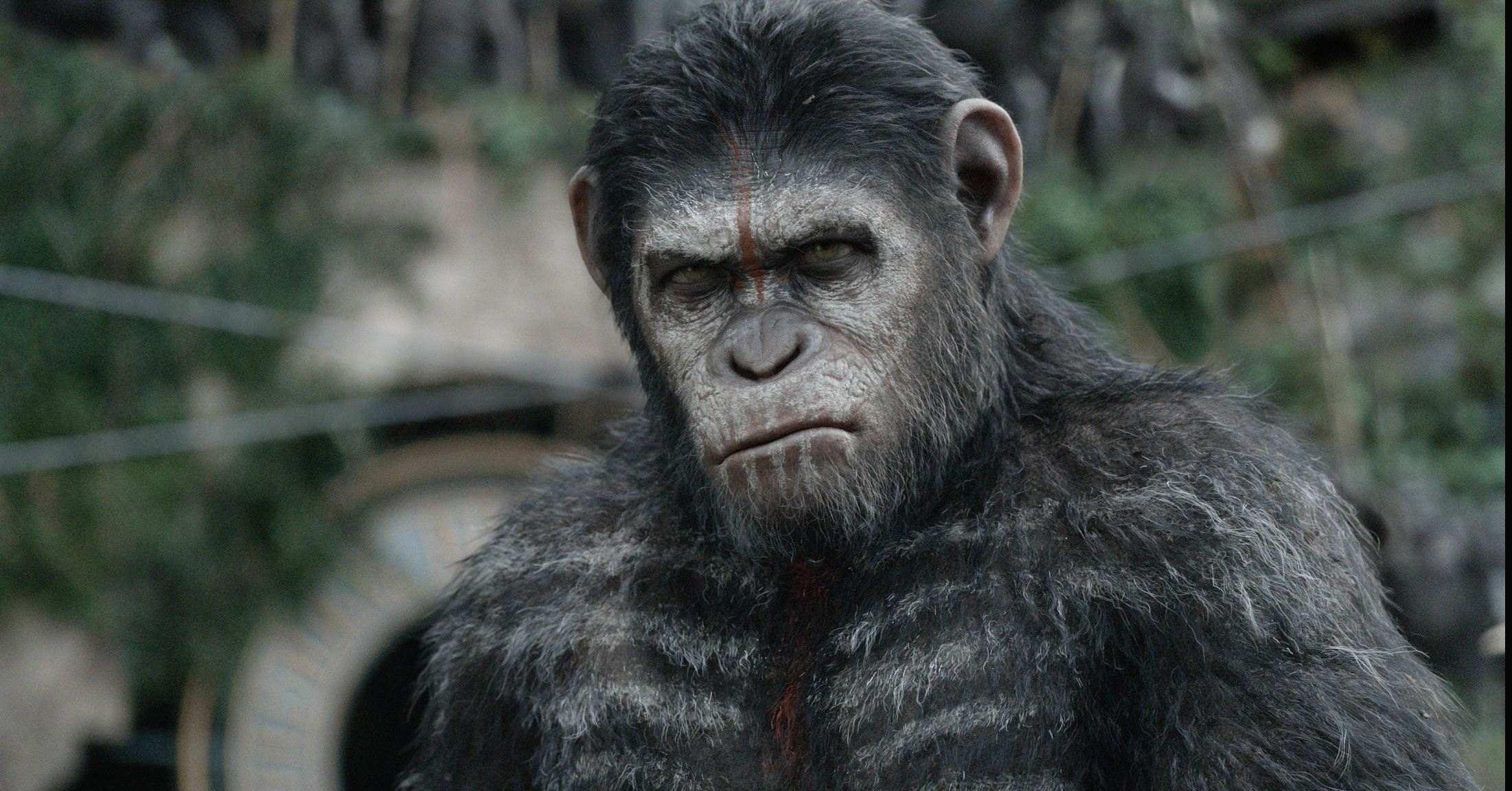 ▲《猩球崛起:黎明的進擊》中的猩猩領袖凱撒。(圖/福斯提供)