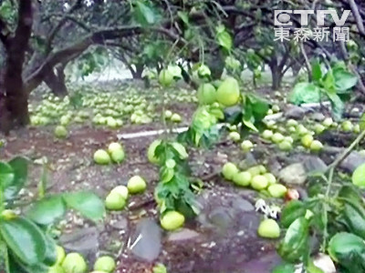 梅姬襲台 全台農產損失逾3億元 宜蘭最慘重