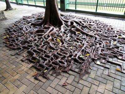 不說妳不知,人與樹的關係真像戀人啊