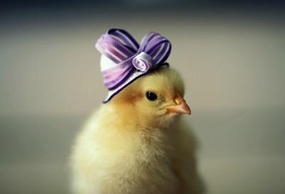 給我親愛的小雞戴帽帽,超可愛der~