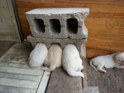 我們不是被罰面壁思過…是太熱了!