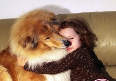 另類保母~適合有小孩家庭養的10種狗